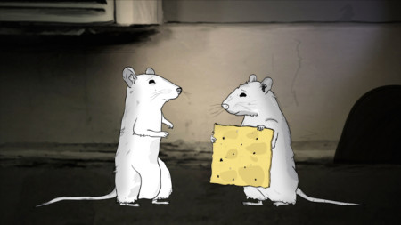 rats-animals
